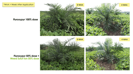 Trial Weed Solut-ion
