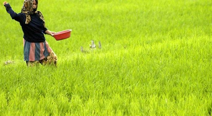 Pandawa Agri Indonesia Dorong Industri Pertanian Berkelanjutan Dan Ramah Lingkungan